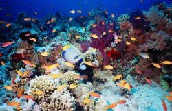 Colors! Coral Garden at Jackson Reef, Red Sea. by Erich Reboucas