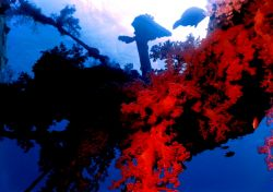 Red soft coral hanging off spar of a wreck Gulf of Acaba,... by Marylin Batt