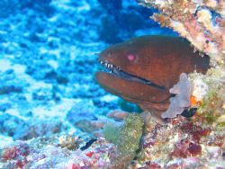 Moray eel who just wanted to pose for pics! Canon Powersh... by John Mcguigan