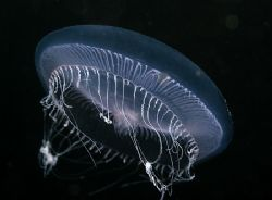 Medusa. Isle of Harris. Scotland. D200, 60mm. by Derek Haslam