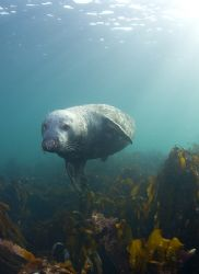 Grey seal. Farne isles. D200, 16mm. by Derek Haslam