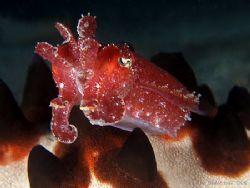 Cuttlefish and starfish background... E900 by Alex Tattersall