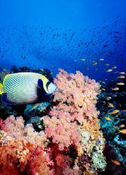 Colors! Colors! Colors! Beautiful Jackson Reef, Tiran, E... by Erich Reboucas
