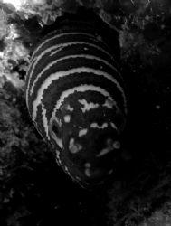 eel by Elizabeth Chase