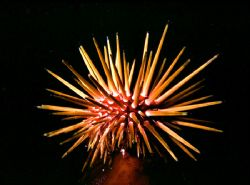'caribbean urchin' enjoy!. by Rick Tegeler