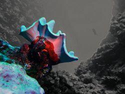 Hole 3, Saipan Grotto by Martin Dalsaso