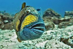 nik 200 sb800 strobe-titan triggerfish by Manfred Bail