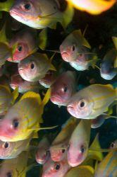 School of fishes in Nosy Be by Ugo Gaggeri