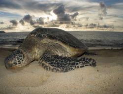 Turtle beach on Oahu. Taken topside after a snorkeling trip. by Gary Ramey