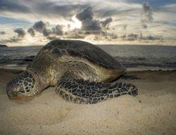 Turtle beach on Oahu. Taken topside after a snorkeling trip. by Gary Ramey