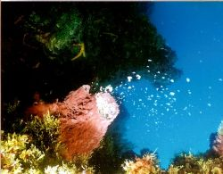 Spawning Sponge. On our last dive day in Cozomel the spon... by Marylin Batt