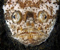 Lembeh, night, with help of my buddy :o) by Gregory Sin