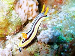 pyjama nudi taken at fury shoal southern red sea with fuj... by Matt Andrew