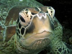 In Your Face! Taken In Sipadan With Canon S80. by Ed Eng