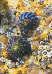 Snails. Aughrusmore, Connemara. D200 60mm Natural light... by Mark Thomas