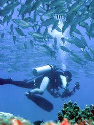 """"""" FISH-FILMER"""" , nice photo of Japanese tourist filming t... by Nicolas Pohl"""