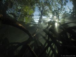 Sunlight through the Mangroves.. e900 plus Fish Eye by Alex Tattersall
