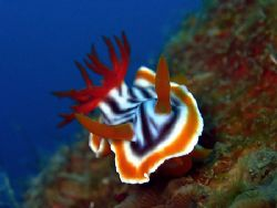 Charging Nudi! Taken In Redang With Canon S80. by Ed Eng