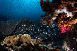 Raja Ampat Reef Scenic Shot.... 400D plus FishEye by Alex Tattersall