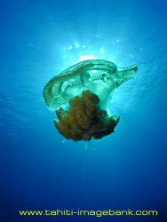 Meduse by Eric Pinel