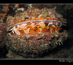Colourful Clam with eyes like little LEDS.