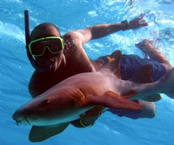 Earl swimming with a nurse shark by Andrew Kubica