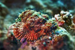 nik D200 - SB800 - vakarufalhi - scorpionfish by Manfred Bail