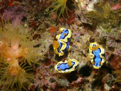 My cuties Nudist during my night dive in divers sanctuary... by Jun Yu