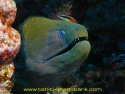 Morey eel. by Eric Pinel