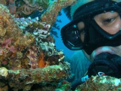 I'm looking on scorpionfish. by Jun Yu