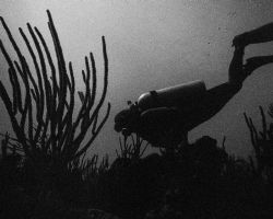 Natural light shot of diver exploring coral formations. A... by Matthew Shanley