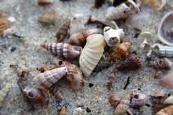 The picture was taken on the beach of Isla de la Juventud... by Robert Roka