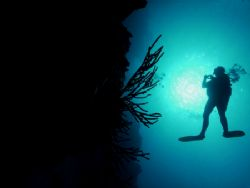 Diver off the wall of Palancar. The image was taken in Co... by Steven Anderson