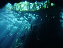 A look up at the jungle from a dive in the Chac Mool ceno... by Kenn Bolbjerg