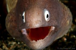 Last one of the year... this happy eel wishes all of you ... by Alex Tattersall