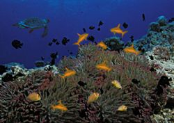 """anemone sharks. perhaps this """"new species"""" will help to s... by Petra Piekenbrock"""