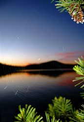 Little spider in its web near the water... by Shawn Jackson