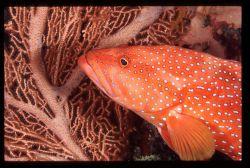 shab umm usk reef by Marco Zanini