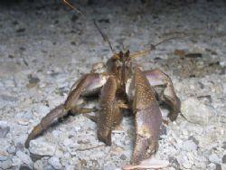 Unknown Crab divers sanctuary bauan batangas Olympus C707... by Jun Yu