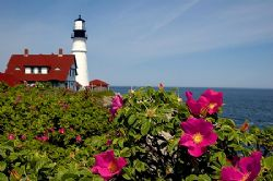 Maine on a beautiful calm day... by Shawn Jackson