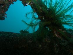 Wreck Ship Location Daryl Laut Anilao Batangas Philippines. by Jun Yu