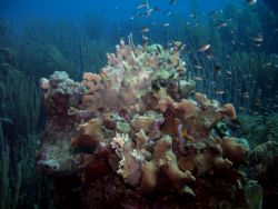 busy coral formation in Bonaire by Jessica Vinokur