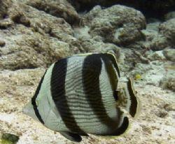 Paradise Reef, Cozumel at 15 meters depth. No strobe. by Kenn Bolbjerg