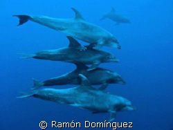 Some bottle nose dolphins to start a diving day in Socorr... by Ramón Domínguez