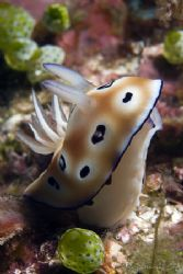 Sniffing nudibranch .... by Alex Tattersall