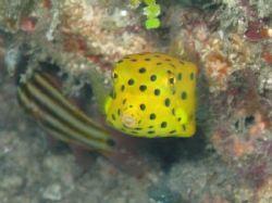 Sponge-Bob! Bohol, Vasayas. by Ben Nichols