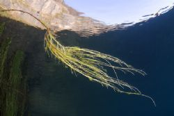 Plant roots. Capernwray. D200, 16mm. by Derek Haslam