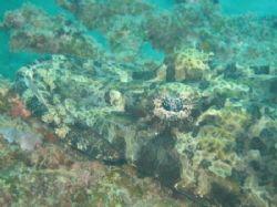Amazing Crocodile Fish. Port Barton, Palawan. by Ben Nichols