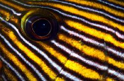Sweetlips Eye and Cheek Closeup by Alex Tattersall
