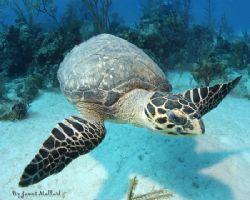 Turning Turtle, Nikon D70 by James Mallard